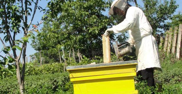 Investitorii japonezi vor sa investeasca in organizarea producatorilor romani de miere