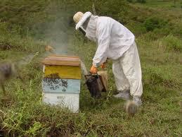 Caut apicultor pentru judetul Timis